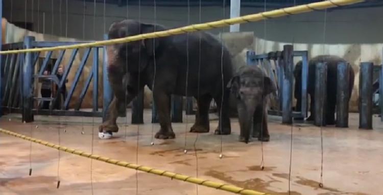 Estos mamíferos son muy inteligentes y pueden aprender de manera rápida. Foto: rostov_zoo_official Seguir